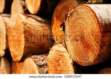 piled tree trunks close up - stock photo