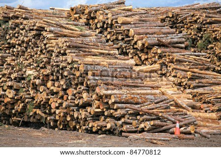 Piles of spruce logs waiting to be processed at a pulp and paper mill. - stock photo