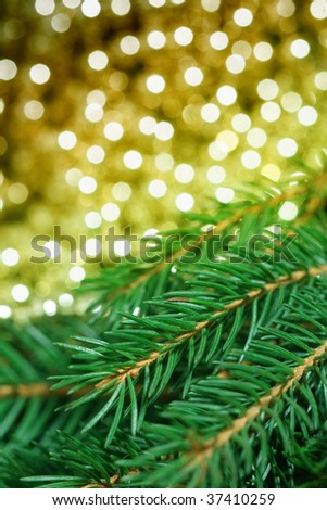 Pine and glittering lights - stock photo