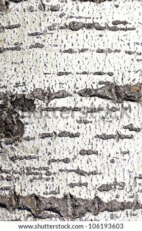 pine bark background - stock photo