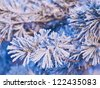 Pine branch in ice - stock photo