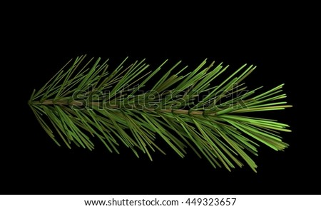 pine branch isolated on black 3d illustration - stock photo