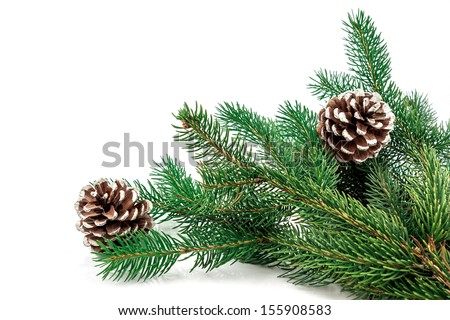 Pine branches with pine cones on white - stock photo