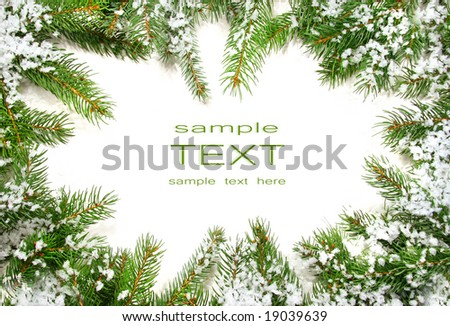 Pine branches with snow on white background - stock photo