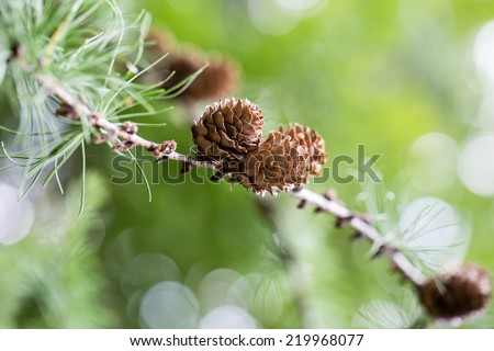 Pine Cone And Branches - stock photo