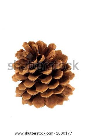 pine cone, female, on white background - stock photo