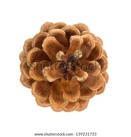Pine cone top view isolated on white - stock photo