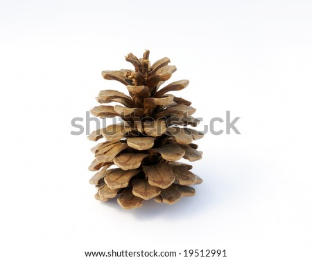 Pine Cone with white background - stock photo