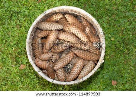 Pine cones - stock photo