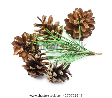 pine cones isolated on a white background - stock photo