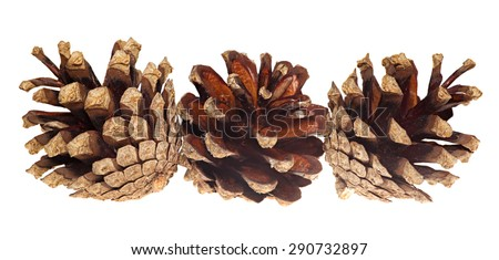 Pine cones isolated on white background. - stock photo