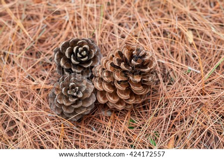 pine cones on the ground - stock photo