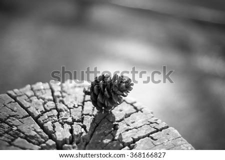 pine cones on the wood. - stock photo
