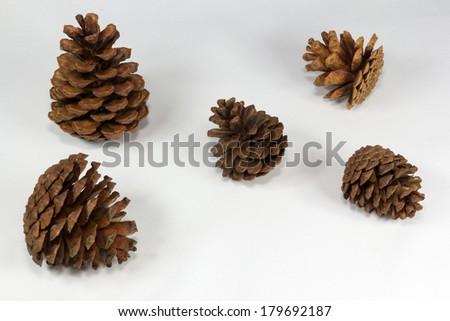 Pine cones on white background - stock photo