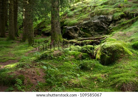 Pine forest growing on a mossed side of a hill in a sunny day near Bergen, Norway - stock photo
