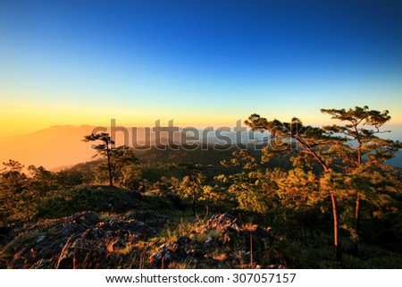 Pine forest on mountain with blue sky twilight. rainforest in Thailand - stock photo