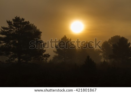 Pine forest with mist at sunrise. Sierra de la Culebra, Zamora, Spain, Natural Park. - stock photo