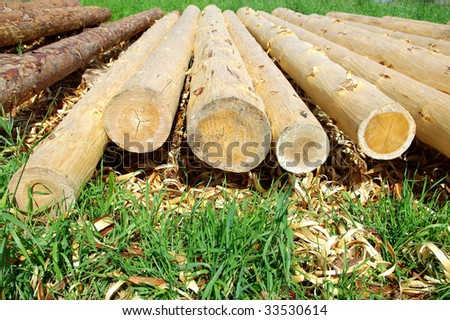 pine logs - stock photo