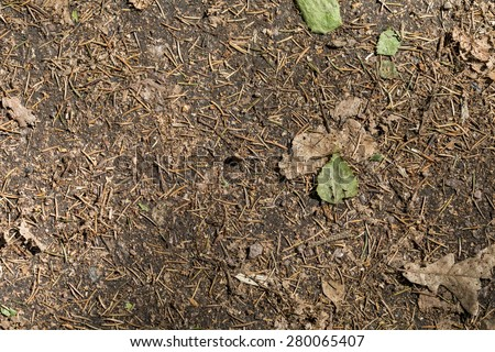 pine needles and leaves on the ground - stock photo