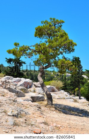 pine on a background of cloudless blue sky in a rocky area. - stock photo