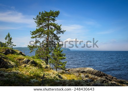 pine on the edge of the island - stock photo