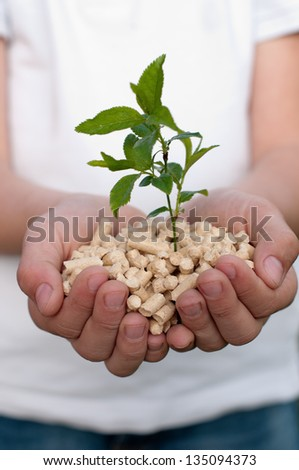 Pine pellets in child's hands - selective focus on foreground - stock photo