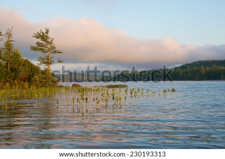 Pine stands tall against the beautiful cloudy sky on a sunny peaceful day - stock photo