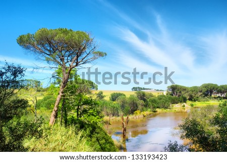 Pine tree and lake. Shot in Western Cape, South Africa. - stock photo