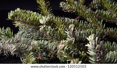 pine tree as a background - stock photo