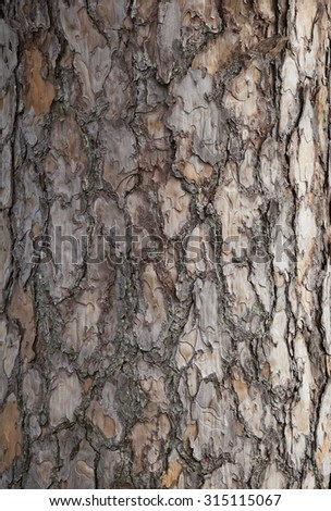xylem stock photos  images   u0026 pictures shutterstock oak tree root diagram oak tree root diagram oak tree root diagram oak tree root diagram