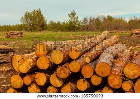 pine tree firewoods - stock photo