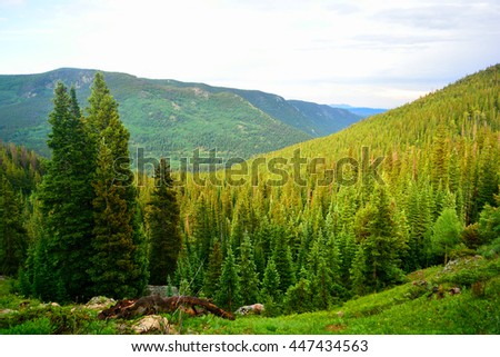 Pine Tree Forest In The Mountains - stock photo