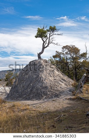 Pine Tree growing out of a formerly geothermal cone in Yellowstone National Park, Wyoming, USA - stock photo