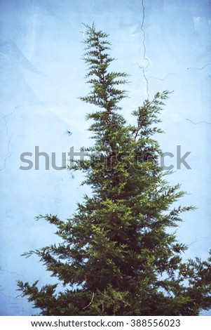 Pine tree in front o a blue wall - stock photo