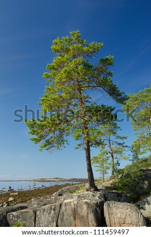 Pine tree on the Rock of Unpopulated Island - stock photo