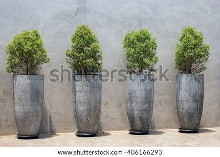 Pine tree seedlings on background mortar - stock photo