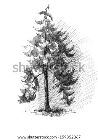 Pine tree sketch drawing isolated - stock photo