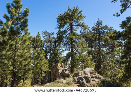 Pine tree stands in cluster of rock boulders near Pine Mountain in southern California. - stock photo