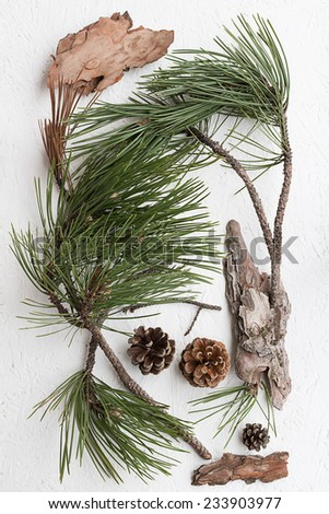 Pine Tree Twigs, Cones and Bark Pieces - stock photo