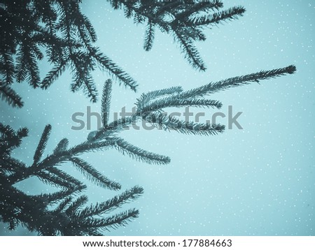 Pine tree with snow useful as a Christmas greeting card with copyspace - cool cyanotype - stock photo