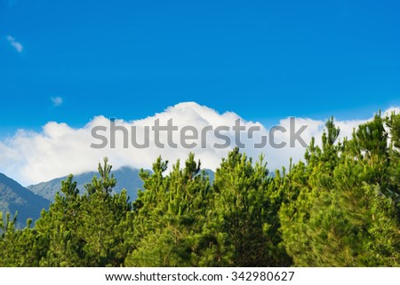 Pine trees against clear blue sky and white cloud in mountainous region  - stock photo