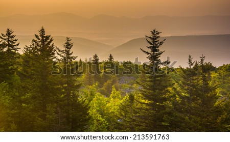 Pine trees and distant mountains at sunrise, seen from Bear Rocks Preserve, Monongahela National Forest, West Virginia. - stock photo