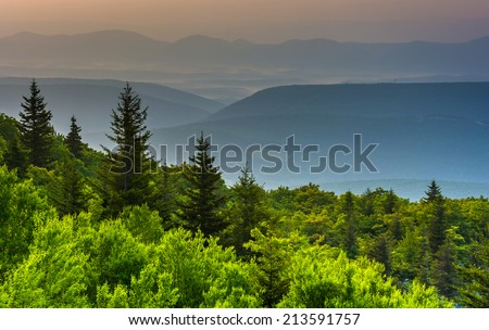 Pine trees and distant mountains, seen from Bear Rocks Preserve, Monongahela National Forest, West Virginia. - stock photo