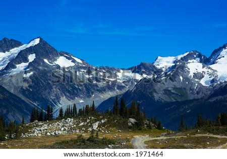 Pine trees and snow peaks of Blackcomb Mountains. More with keyword group14l
