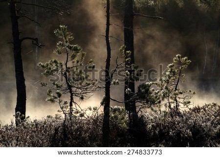 Pine trees at the bank of small pond in wilderness at Tammela, Southern Finland. Early May morning. - stock photo