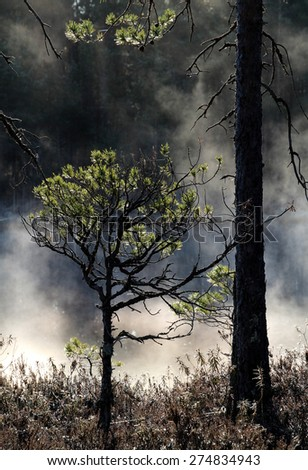 Pine trees at the bank of small pond in wilderness at Tammela, Southern Finland. Early May morning few moments after sunrise. - stock photo