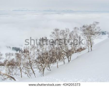 Pine trees, Gulmarg, Kashmir. - stock photo