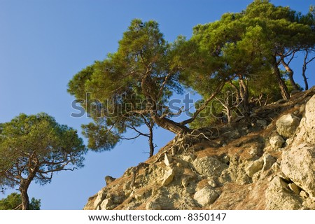 Pine-trees on slope of rocky hill - stock photo