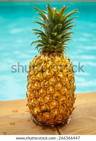 Pineapple in the pool - stock photo