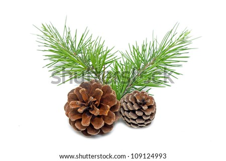 Pinecone - stock photo
